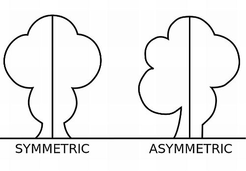 interrelationship of symmetry and asymmetry with balance and harmony
